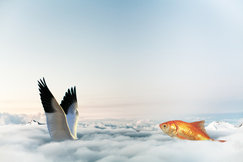 Wings Goldfish Clouds